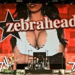 Highfield 2013-zebrahead
